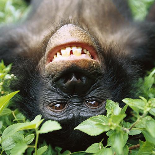 Monkey spank ( final-ish ;p)