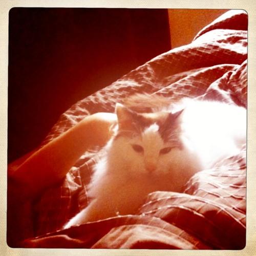 Kitty Litter Tres Melancholy