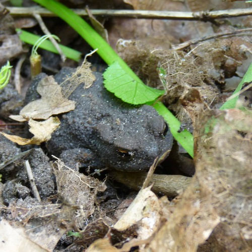 Blackbird & Toad
