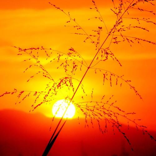 Swike - Sunshine
