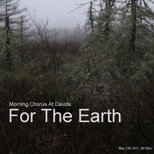 For The Earth, Morning Chorus at Davids