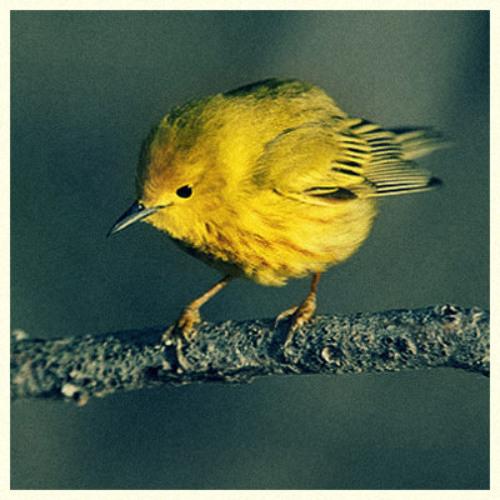 Michael Vits - Singing Bird (Warb's 'Yellow Warbler' Remix)