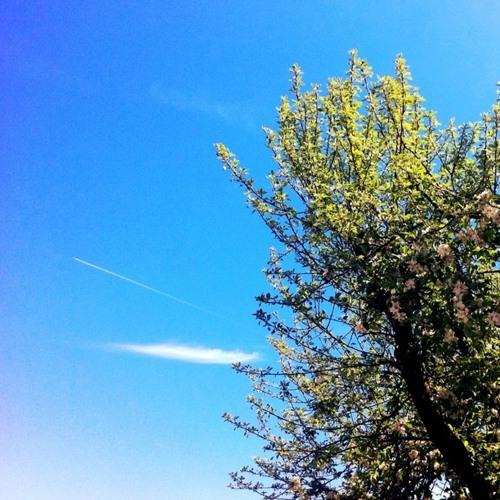 J. Hammer - Fragrant Spring