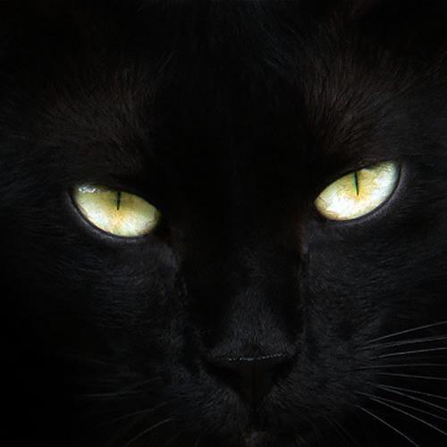 Acapella - Kelis (Benny Benassi Remix vs. Missing Black Cat - Club Edit)