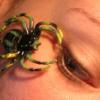 Daddy Kev: Itsy Bitsy Spider