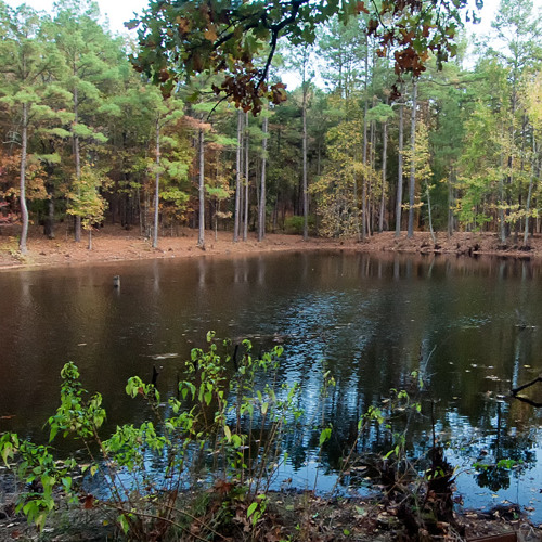 Lundsford Corner pond - windy evening with frogs and chuck-wills-widow (I)