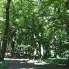 Already summer in the forest at Dobrovat
