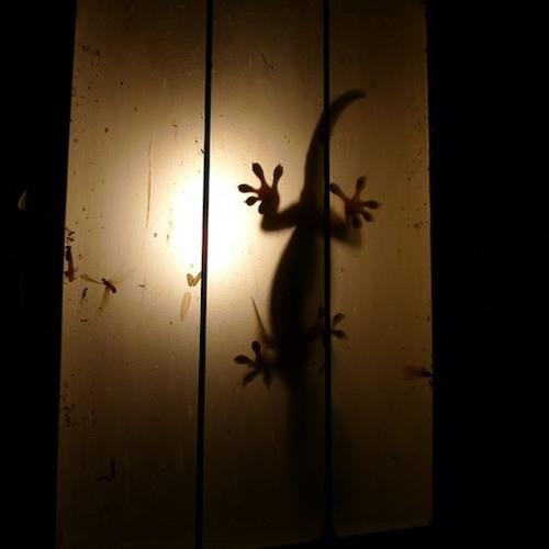Lizard's Dream
