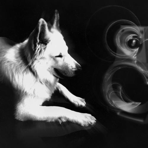 WhiteWolf - Through the storm