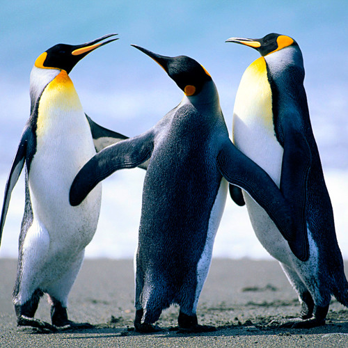 Zamjam - The Penguins Gather (the b-sides)