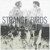 Strange Birds - Chasing Ghosts