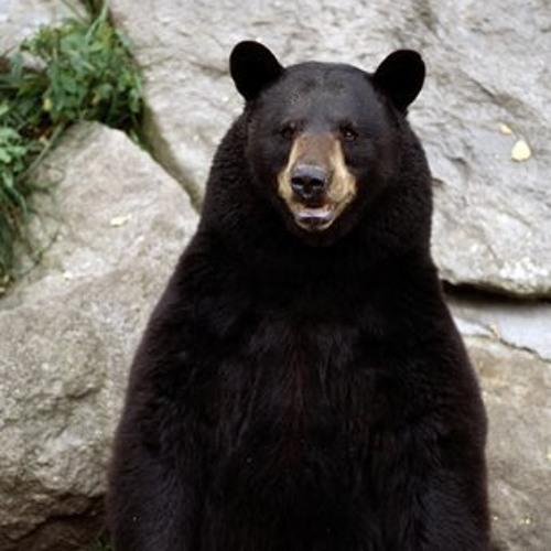 Bear - The Reverb Junkie feat. DNTEL