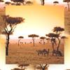 Cave Chorus x Sleepy Lesbos - Aaduna Si Dafa Rey (The World Is Huge)