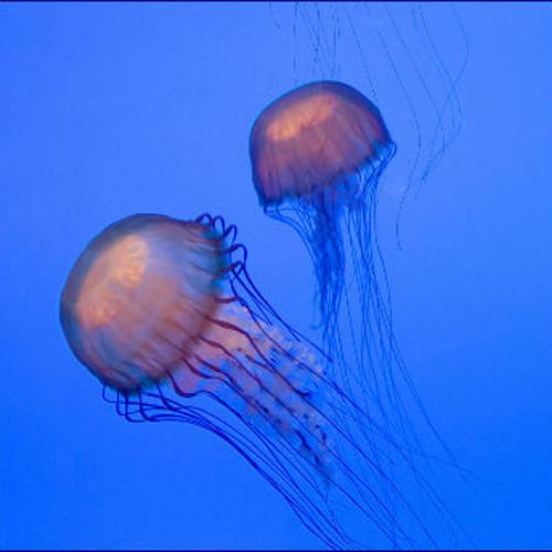 Ocean Life by Diederik de Jonge