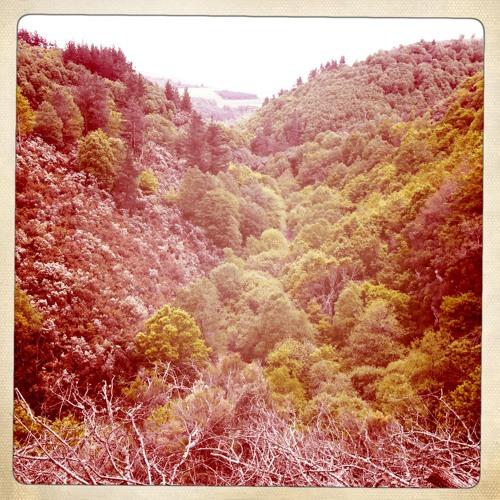 El bosque se mueve (The forest moves) - Oscos