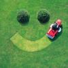 Grass gone - 660News