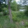 Bullfrog pond