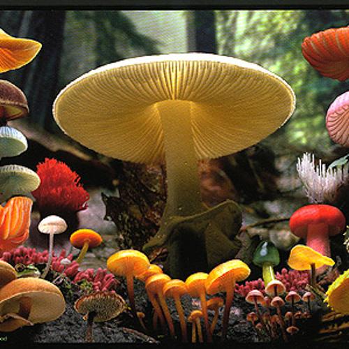 The Mushroom Lounge