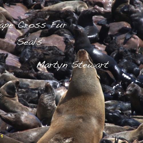 20110321T02 Cape Fur Seals-Namibia