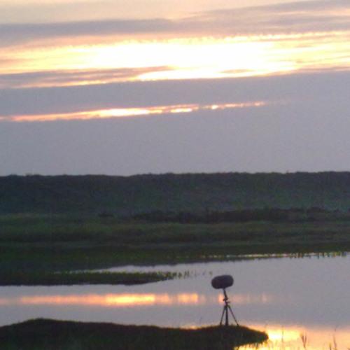 CLEY MARSHES, coastal birds at dawn.
