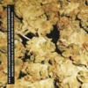Dopefight - Babygoatsick (Buds)