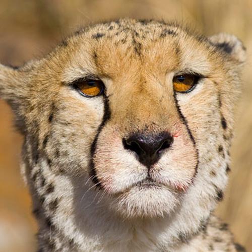 Jamie Thomson - La Cheetah Mix - Jul 2011