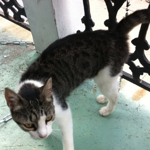 Cat Chat at New Orleans