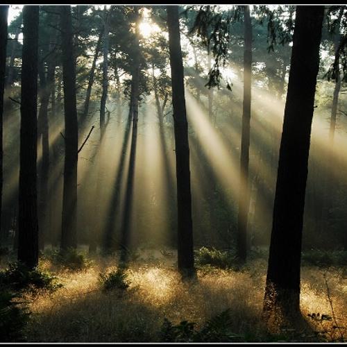 Arlen Fox - Light morning