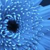 Frankie Rose – Blue Flower (Mazzy Star cover)