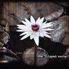John Wesley - Lilypad Suite (album montage)