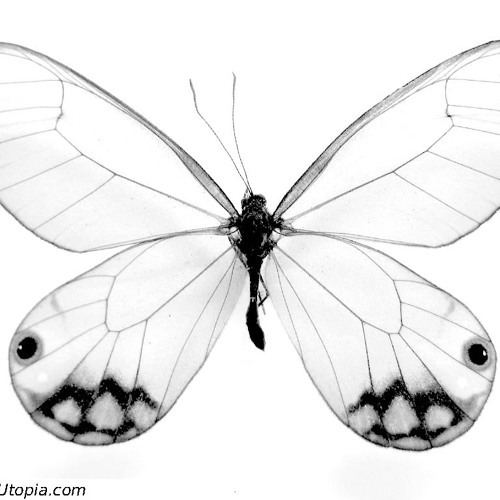The Butterfly Effect - Nietes