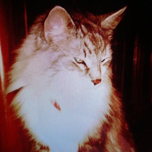 TS Eliot - The Naming Of Cats at emasalo