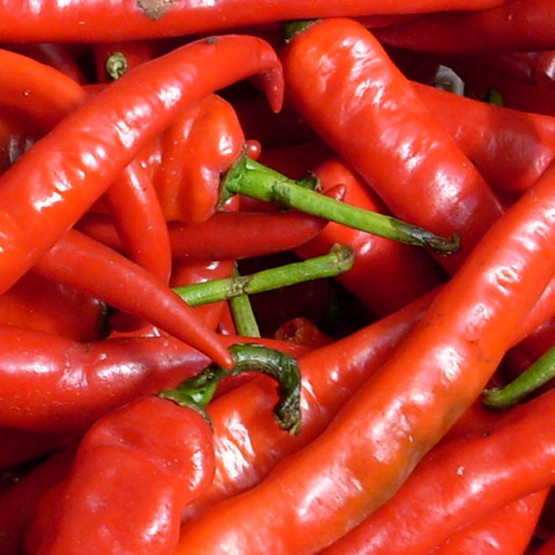 yanzii's 125 Chilling Chilies