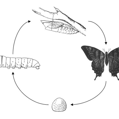 Segamented Worms - Metamorphic Cycles