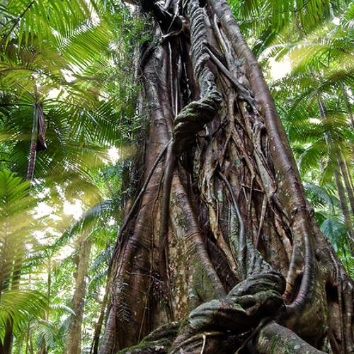 Rainforest peace