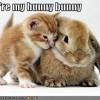 Kannamix - Hunny Bunny [FREE]