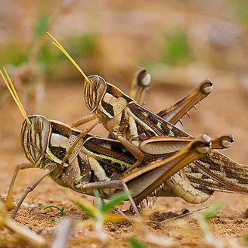 Spaghetti Legs & Klark Kent - The Locust Romp (Free Download)