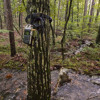 Ouachita Forest stream - Shure MX391/O+Sony-D50 - Aug 13, 2011 (mic-test)