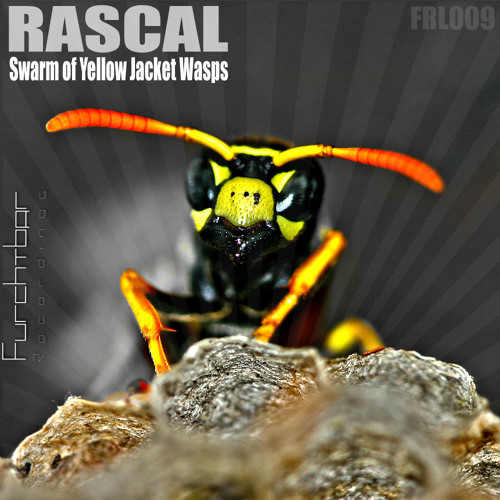 Swarm of Yellow Jacket Wasps [SC Cut][Furchtbar Recordings]