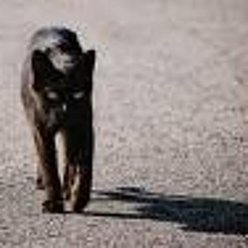 Black cat.~piano~