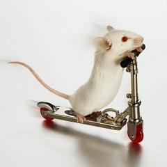 Señor Mouse