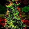 Welcome to JamRock - Damian Marley