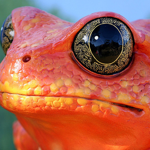 "Eskmo: ""Amphibian"" (Glitter version, 2009)"