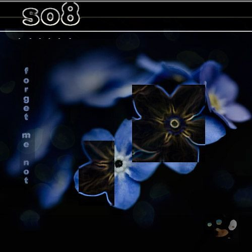 so8 - forget me not
