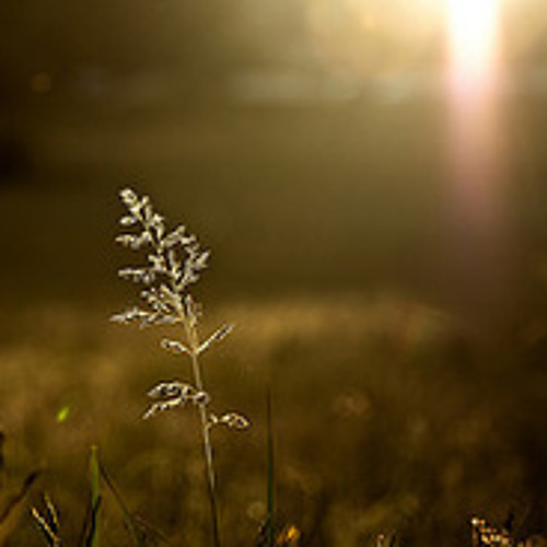 Halo & Myristica - Forever Sunset