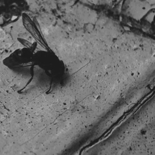 DROWN06 Teaser - Depriver   Pest Lives - Split