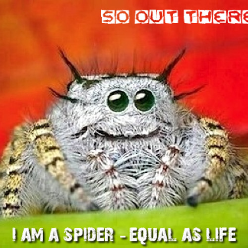I am a Spider - I am LIFE (please don't squish me!)