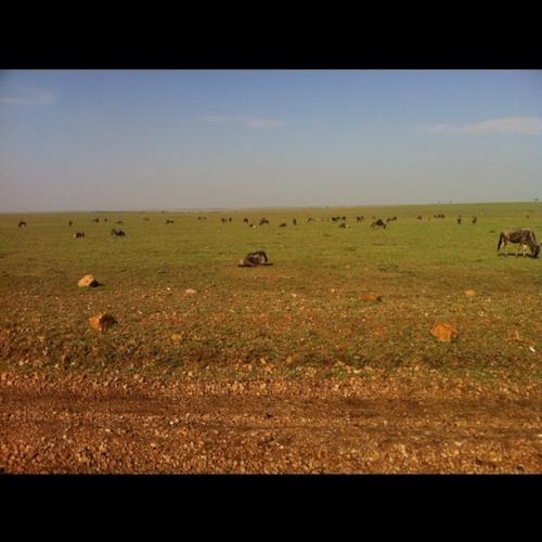 Captains log, after lions come hustling at Masai Mara National Reserve