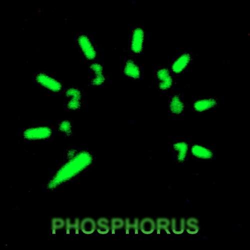 Salt N Sugar - Phosphorus (preview cut)