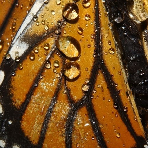 A Speck On A Butterfly's Wing